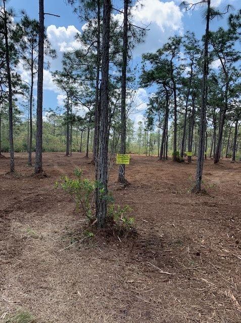River Ranch Camp Lots For Sale